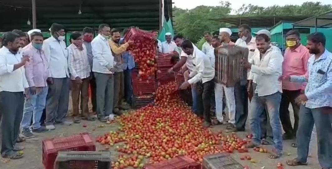 समशेरपूर टोमॅटो उत्पादकांचे आंदोलन