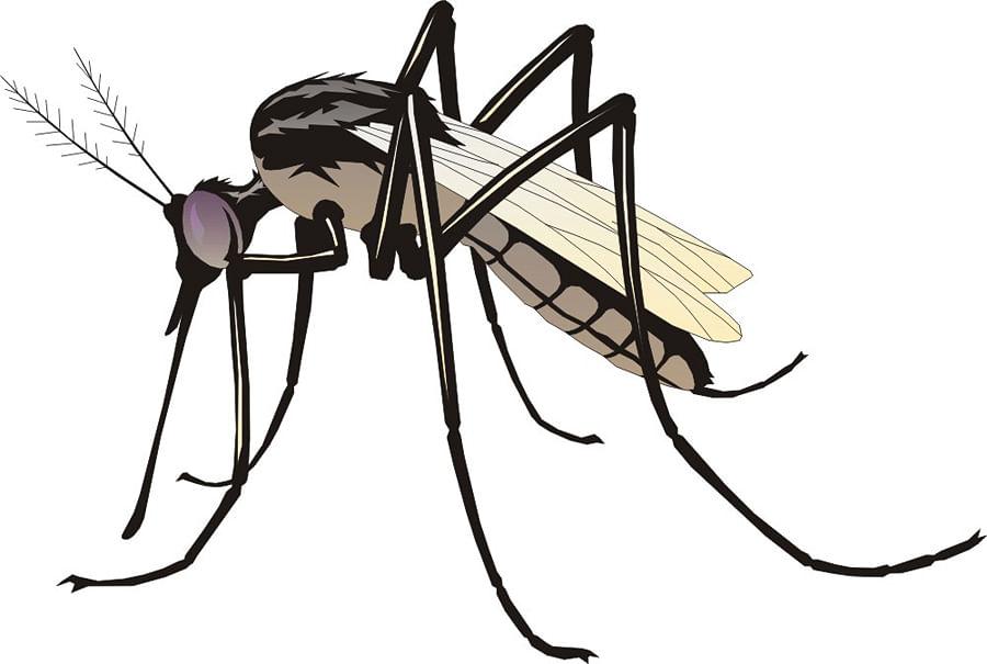 धुळ्यात डेंग्यू, मलेरियाचा उद्रेक