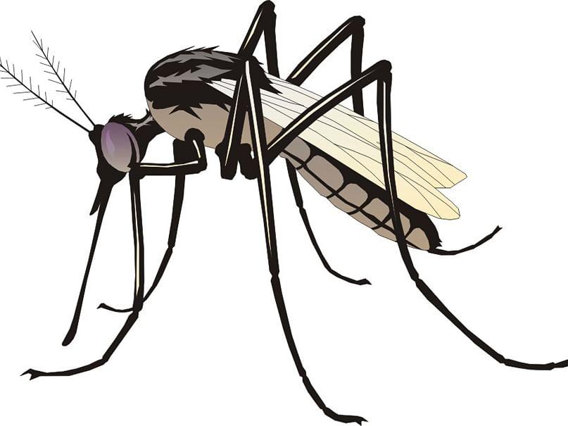 करोनासोबत डोक्याला डेंग्यू, चिकुनगूणाचा ताप