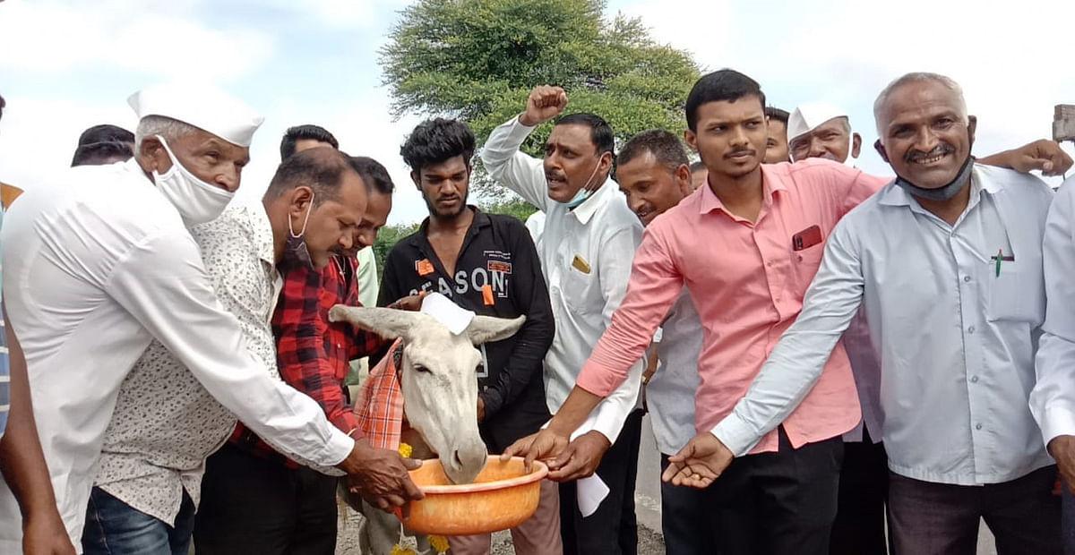 गाढवाला दूध पाजून केले आंदोलन