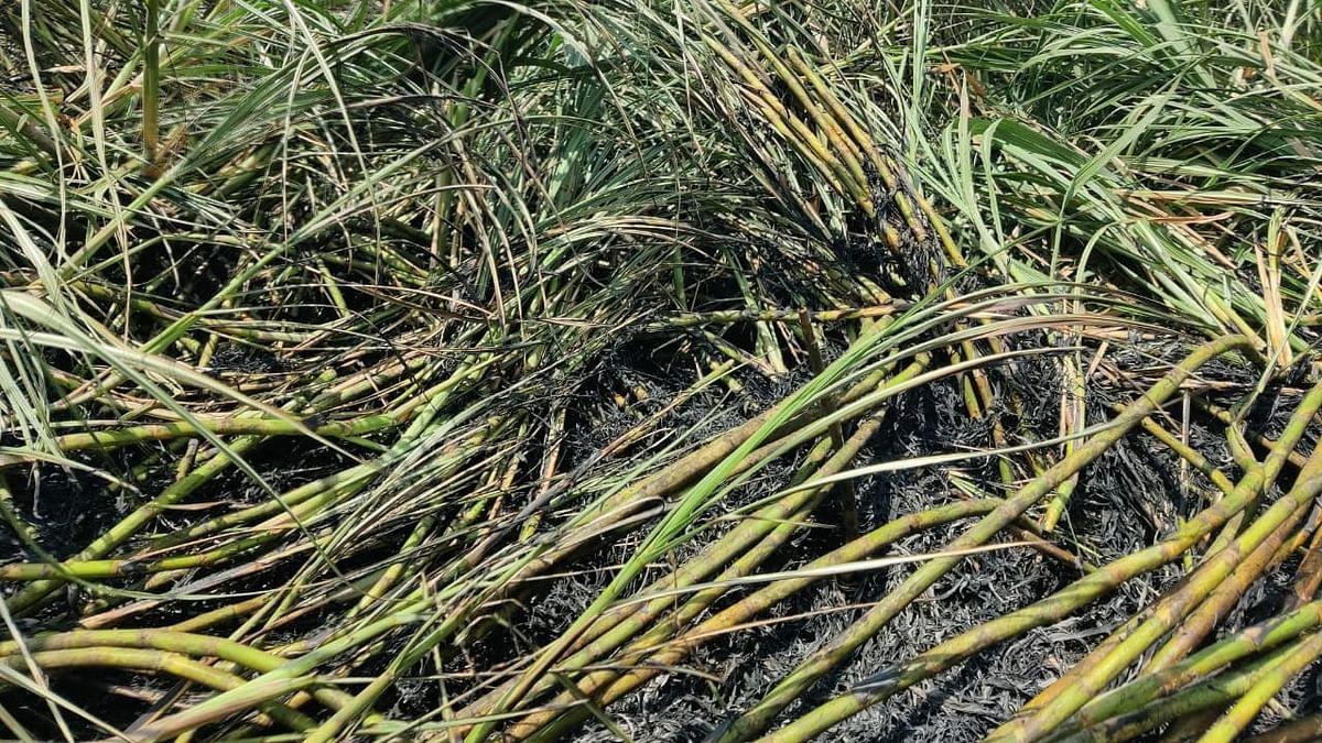 शॉर्ट सर्कीटमुळे शेतात लागली आग