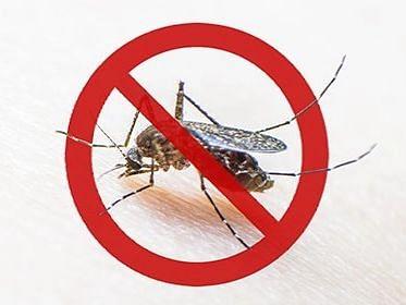 15 दिवसात डेंग्यूचे तब्बल 84 रुग्ण