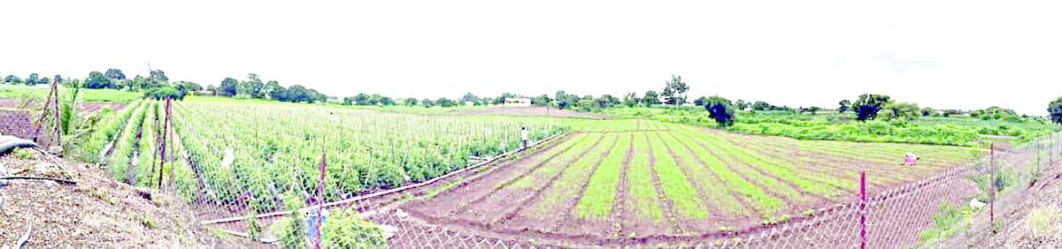 हवामान बदल आणि शेती