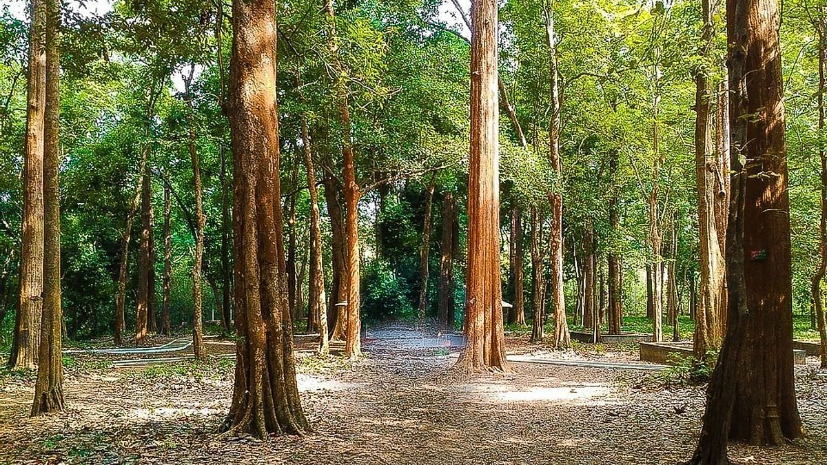 Need to curb teak wood smuggling