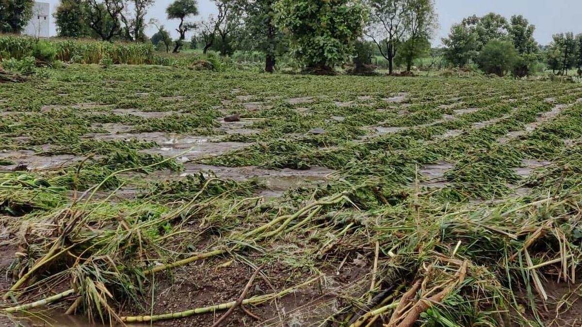 चाळीसगावला पुन्हा पुराचा वेढा, पाच हजार हेक्टर शेतीचे नुकसान