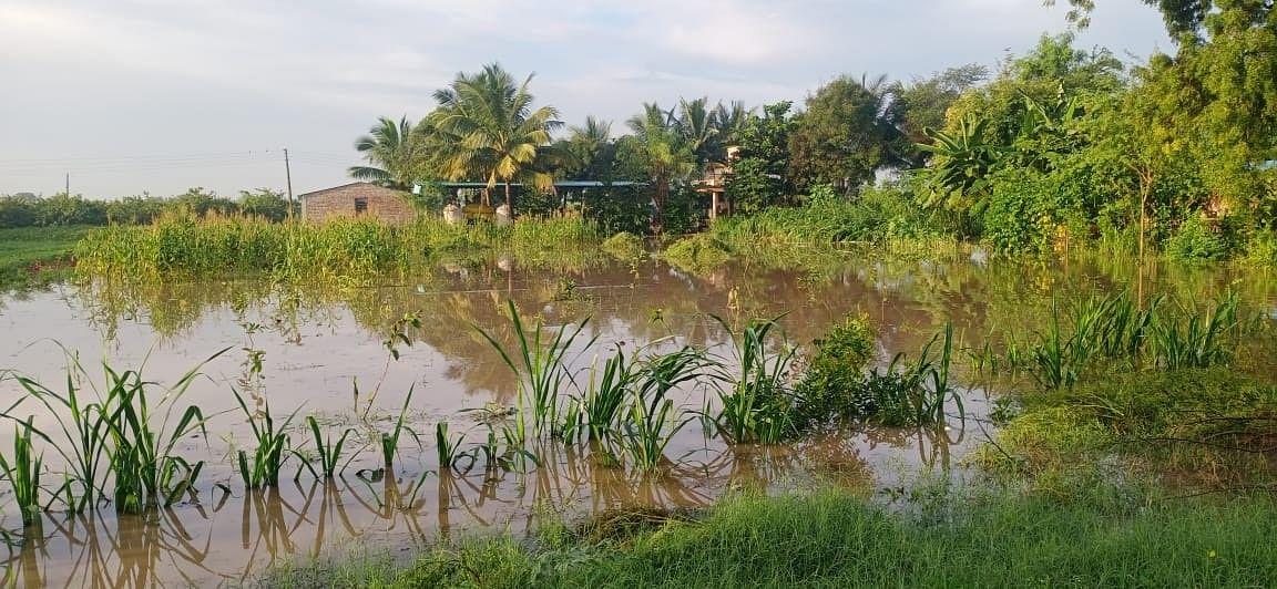 राहाता तालुक्यात काही गावांमध्ये मुसळधार