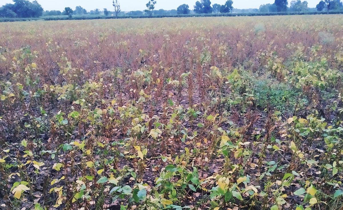 शेतात सोयाबीनसारख्या पिकांमध्ये पाणी साचल्याने शेतकर्यांची चिंता वाढली