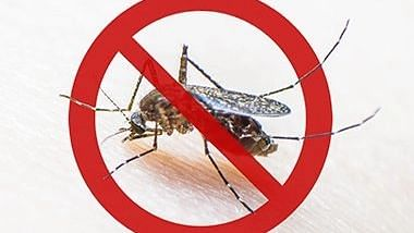 औरंगाबादमध्ये अवघ्या तीन दिवसात ४८ डेंग्यू बाधित रूग्ण