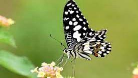घरात फुलपाखरांचे चित्र ठेवण्याचे फायदे