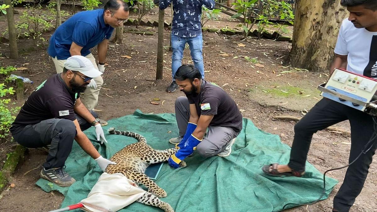 Team efforts save life of leopard