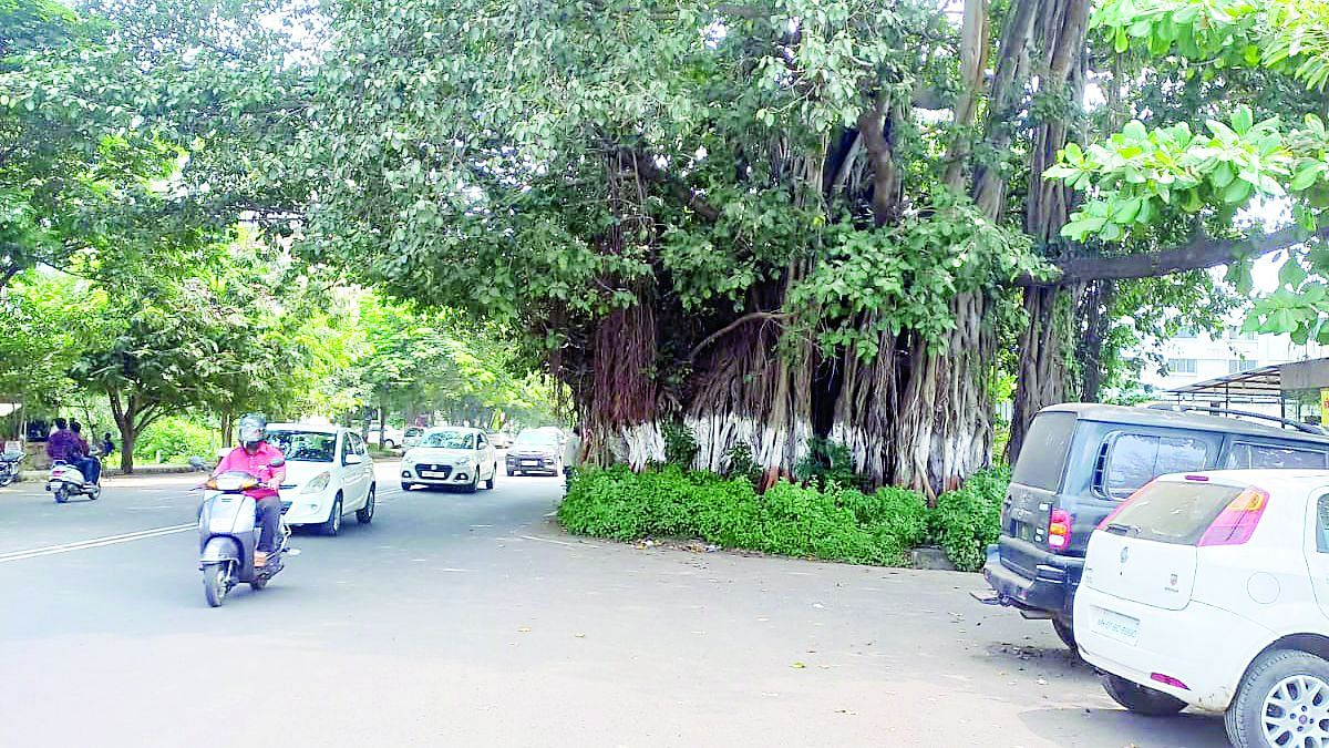 प्रभाग 8 : मुख्य रस्त्यावरची झाडे जीवघेणी