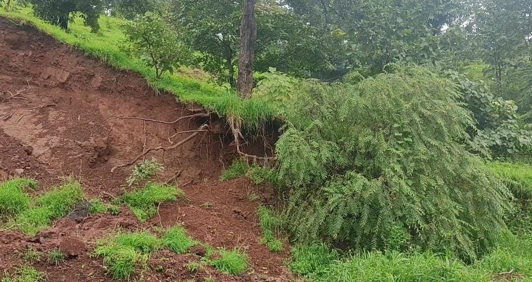 धोकादायक स्थितीतील झाडे बाजूला करण्याची मागणी