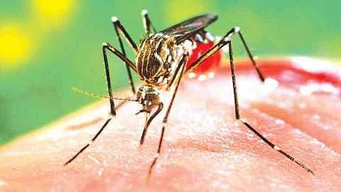 13 dengue patients found this month