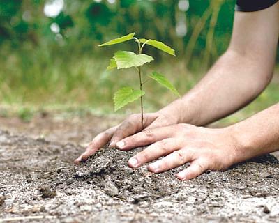 26 लाख झाडे कोमेजली; वनविभागाचे साडेबारा कोटी पाण्यात