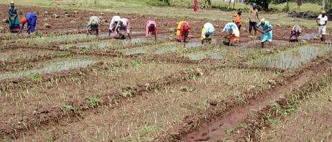 शेतकर्यांनी ठरविले शेतमजुरी कामाचे दर