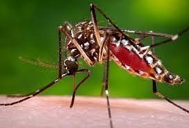 देवळाली प्रवरा, राहुरी फॅक्टरी परिसरात चिकनगुण्या, डेंग्यूसदृश आजाराने नागरिक हैराण