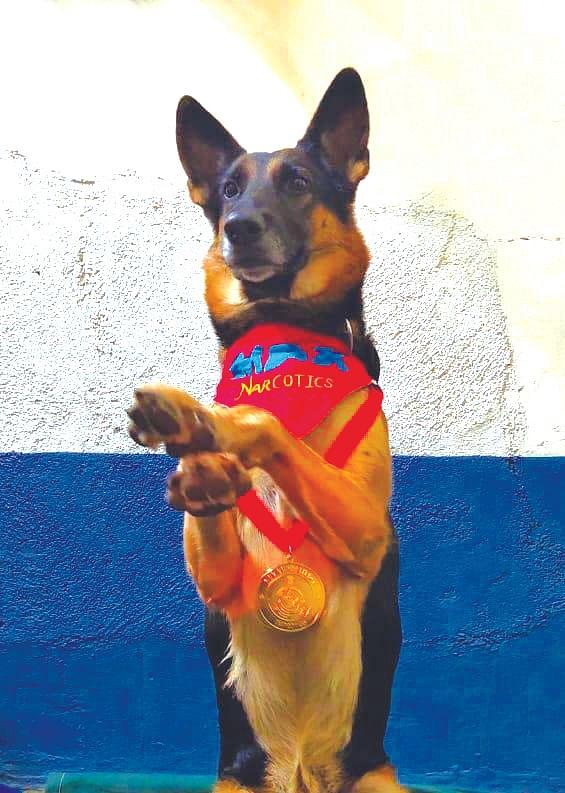 Max gets top dog honour, Google wins bronze