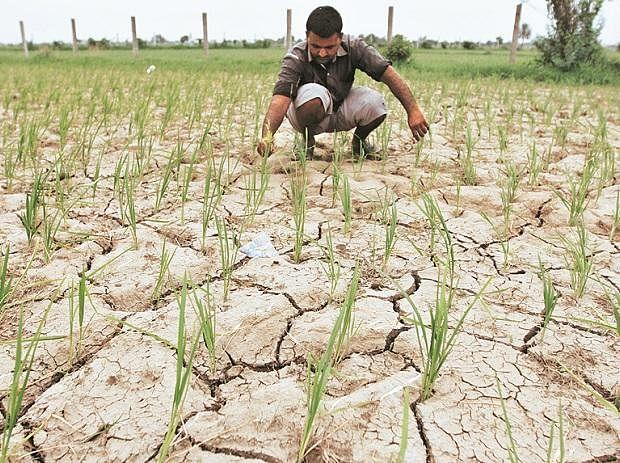 Rs 191 crore disbursed so far to farmers
