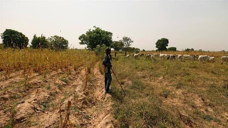 सिन्नर : शेतीच्या वादातून दोन कुटुंबात हाणामारी, एकाचा मृत्यू