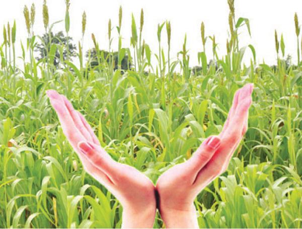 11 हजार शेतकरी पीकविमा मदतीपासून वंचित