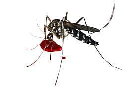 वैद्यकीय अधिकाऱ्यांना डेंगू : उपचारासाठी मुंबईला धाव