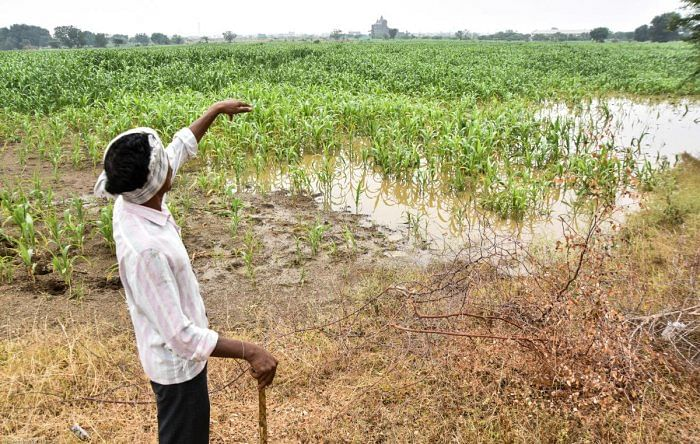 5.26 lakh rain-hit  farmers await aid