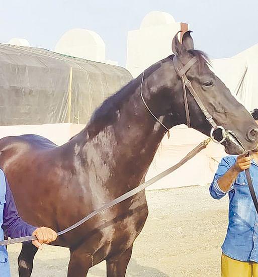 अबब ! चक्क 10 कोटींचा घोडा