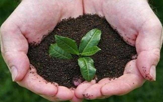 PlantasaplingwithBappa