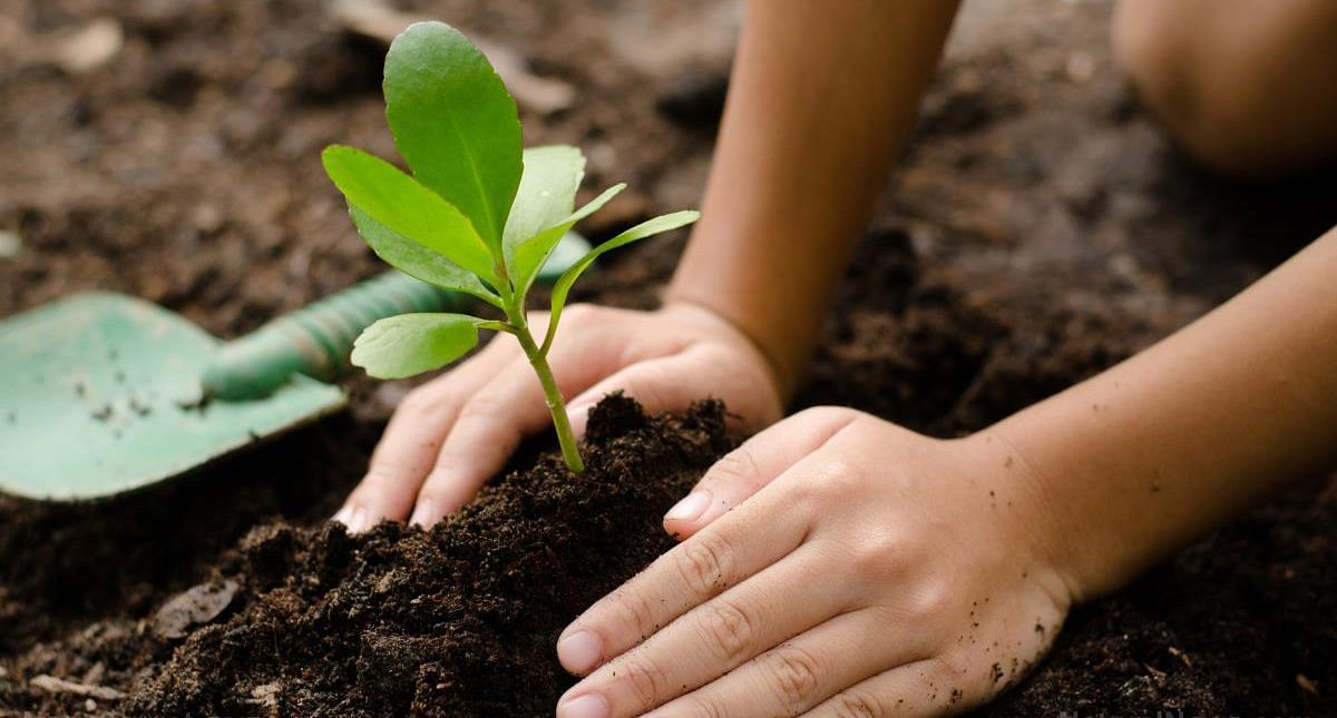 Collectorate's notice on tree plantation drive
