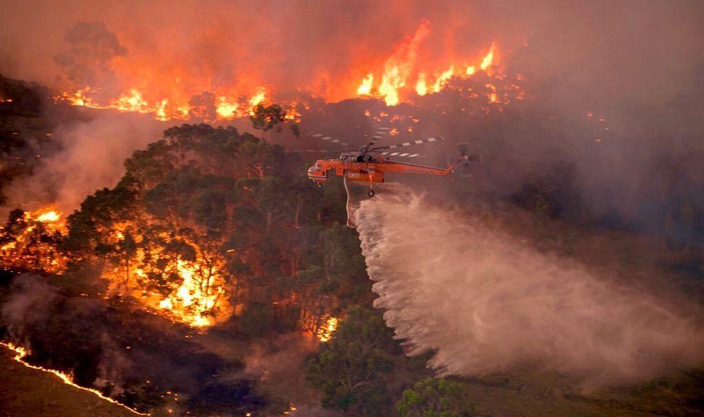 ऑस्ट्रेलियातील वणवा विझता विझेना; लाखो प्राणी, पक्षांचा होरपळून मृत्यू