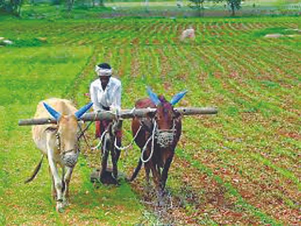 अकोल्यात मोर्चा काढून शेतकरी विरोधी कायद्याची होळी