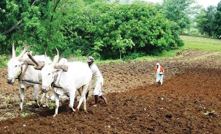 शेतकरी कर्जमाफीचे 'आधार प्रामाणिकरण' यशस्वी