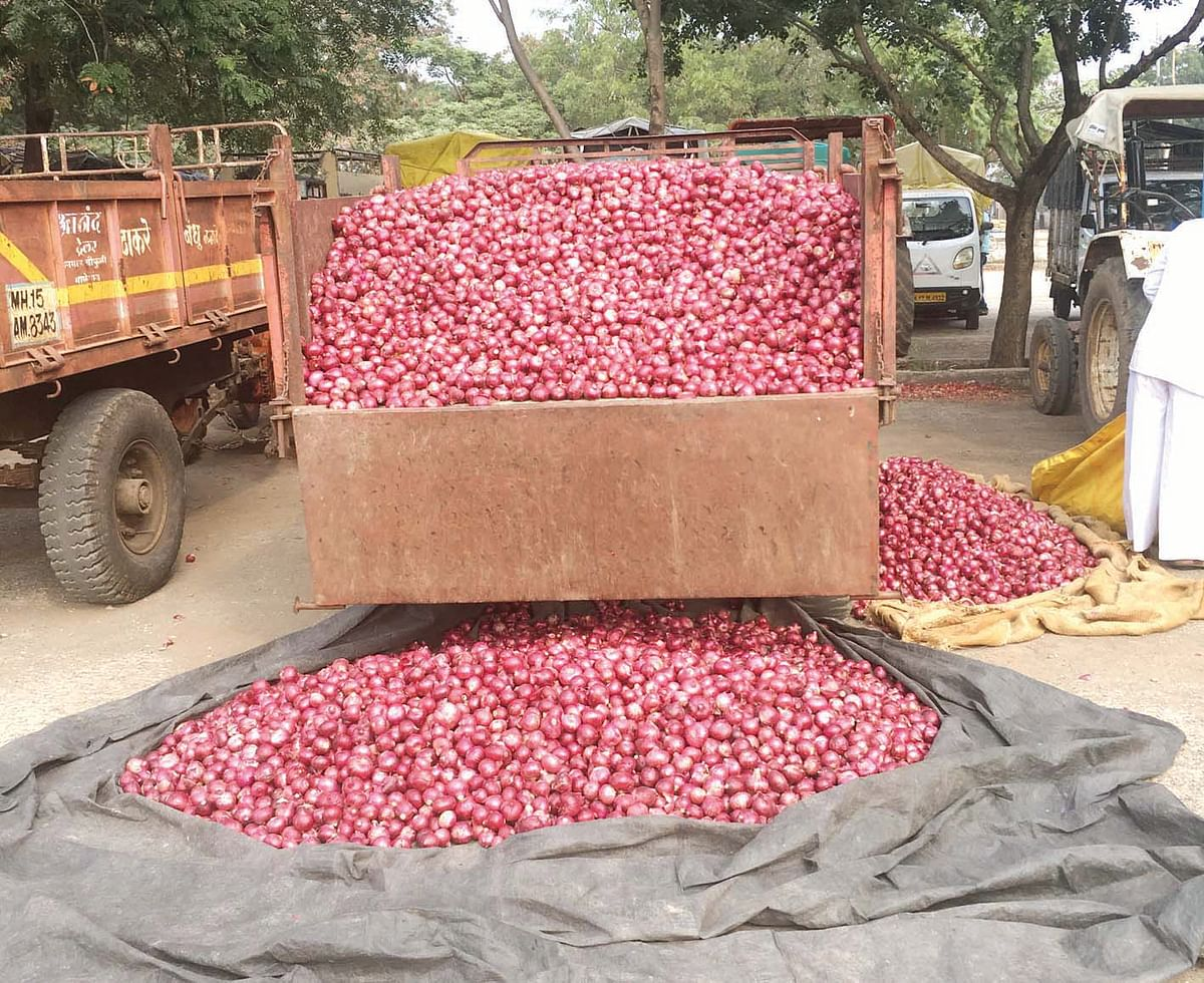 Govt lifts ban on onion exports to curb falling prices; Onion trades @ Rs 900/quintal at Lasalgaon AMPC