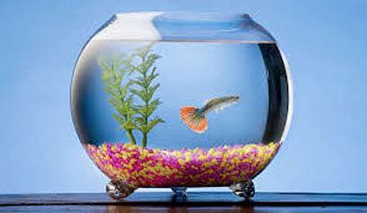 भविष्यवेध : नशिबाशी माशांचा काय संबंध आहे?
