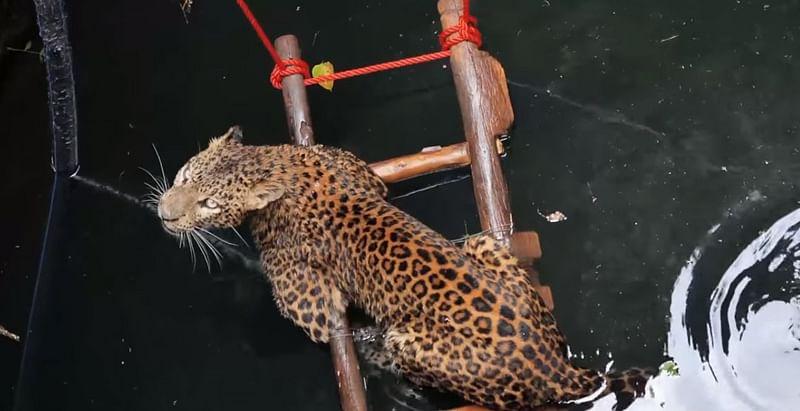 वन्यजीवांना वाचविण्यासाठी हायटेक 'एफएआरटी'