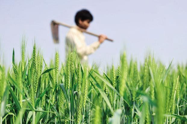 कृषी क्षेत्रातील संधी