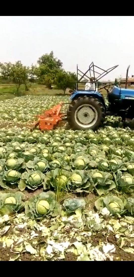 देवळाली कॅम्प : शेतकऱ्याने कोबी वर फिरवला रोटर; लॉकडाऊनमुळे पिके मातीमोल