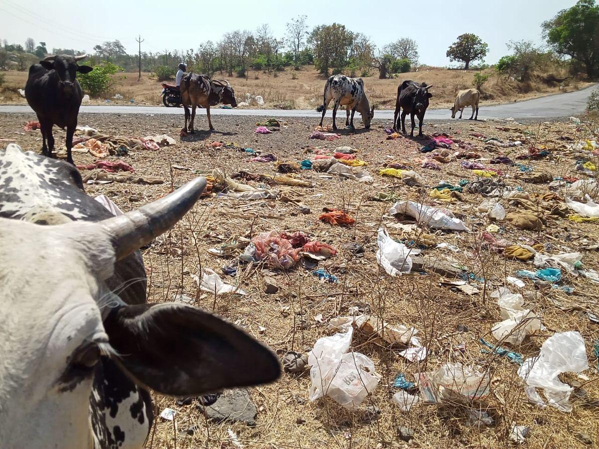 त्र्यंबकेश्वर : तोरंगण घाट होतोय कचरा डेपो; जनावरांसाठी जीवघेणा
