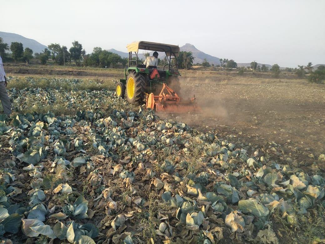 देवळा : खामखेडा येथील शेतकऱ्याने एक एकर कोबीवर फिरवला रोटर