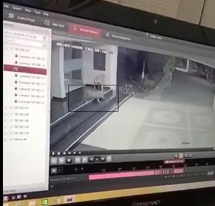 Video : बापरे! नामको रुग्णालयातील बिबट्याचा संचार सीसीटीव्हीत कैद