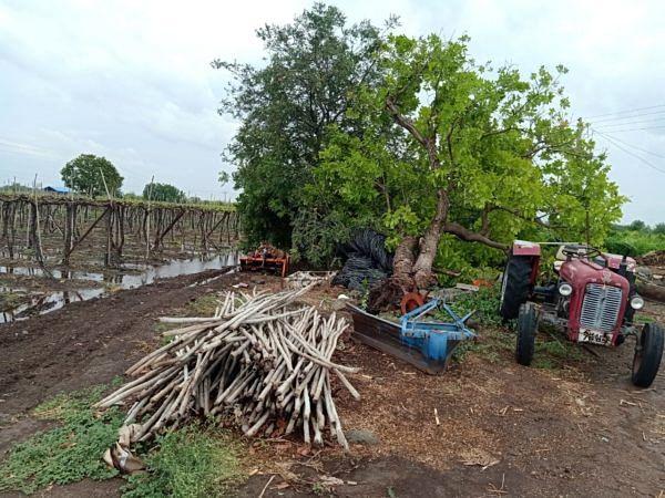 राहाता तालुक्यात वादळी वा-यामुळे शेतकऱ्यांचे मोठे नुकसान