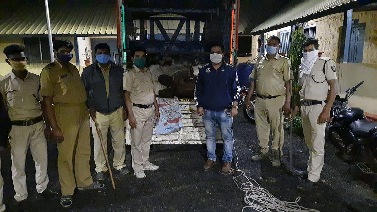 सुरगाणा : जनावरांची अवैध वाहतूक करणाऱ्या वाहनचालकावर पोलिसांची कारवाई