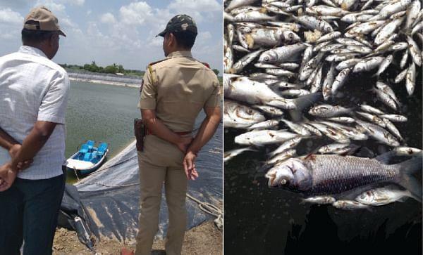 करजगाव येथे शेततळ्यातील 22 हजार माशांचा विषबाधेने मृत्यू