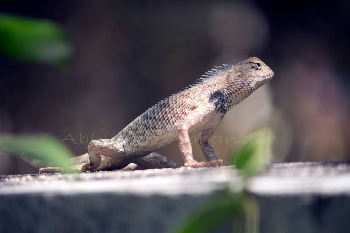 लॉकडाऊन फोटोग्राफी : निसर्गाची किमया नक्की पाहा आणि शेअर करा