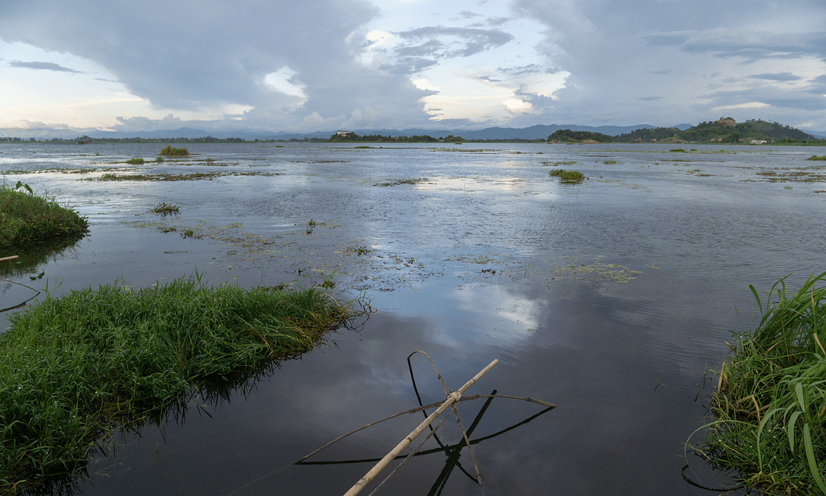 Why has there been a decline in Manipur's native fish species?