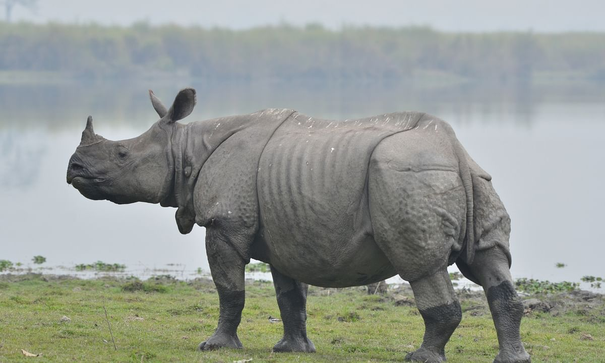Assam: Rhino 'poacher' wins panchayat elections on Cong ticket