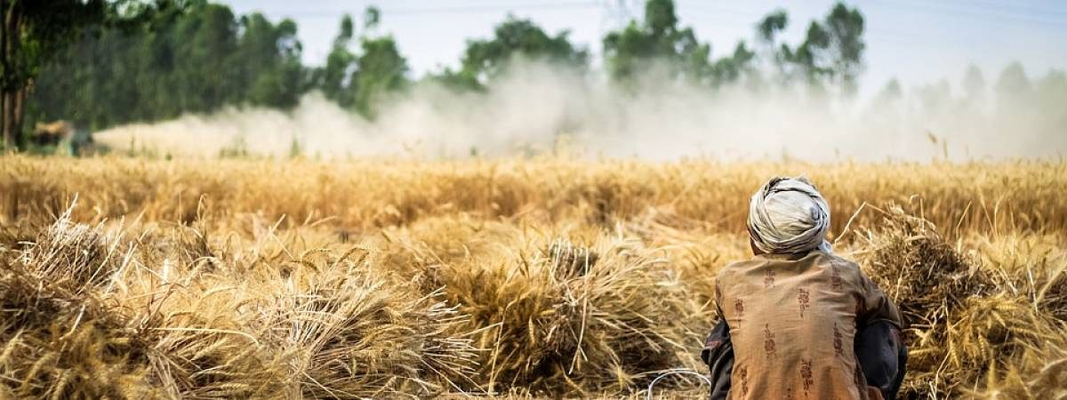 Tripura government would spend Rs 37.36 crore in procuring paddy from farmers