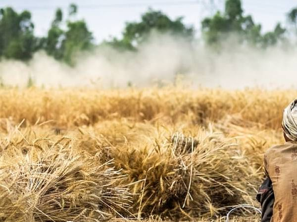 Tripura to procure 20,000 MT paddy from farmers at MSP