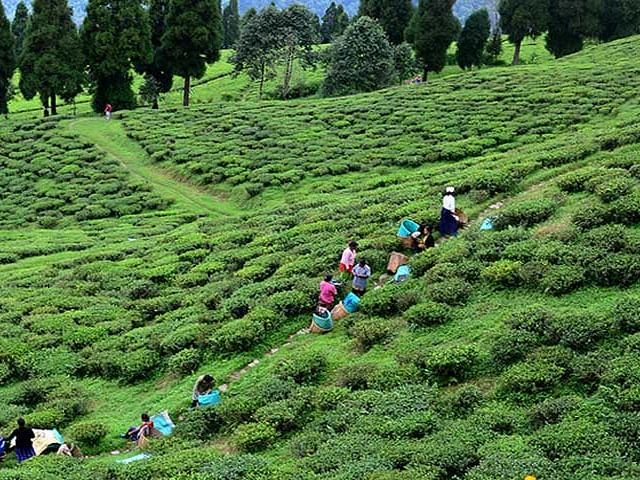 Darjeeling hills: An indictment of TMC-ed government