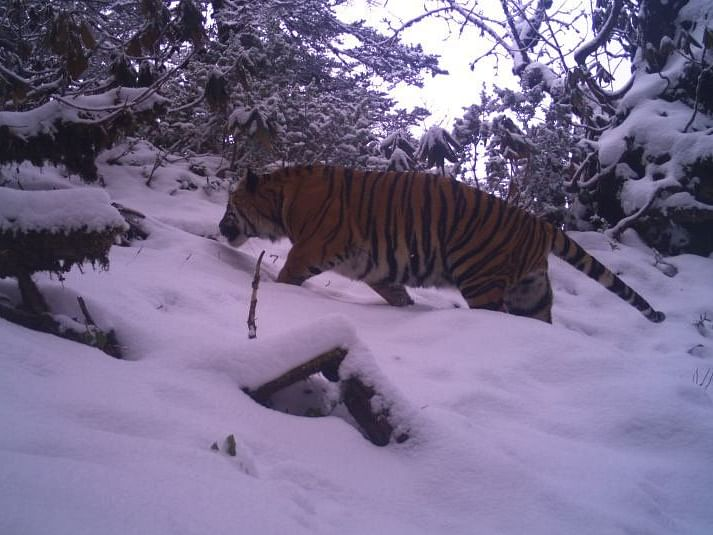 Arunachal govt wants Dibang Valley to be declared as tiger reserve